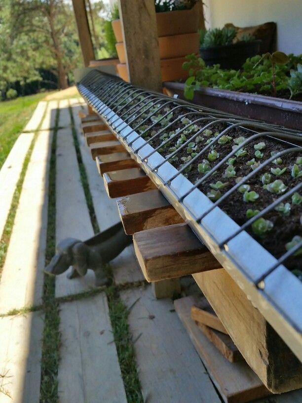 Succulents | Suculentas