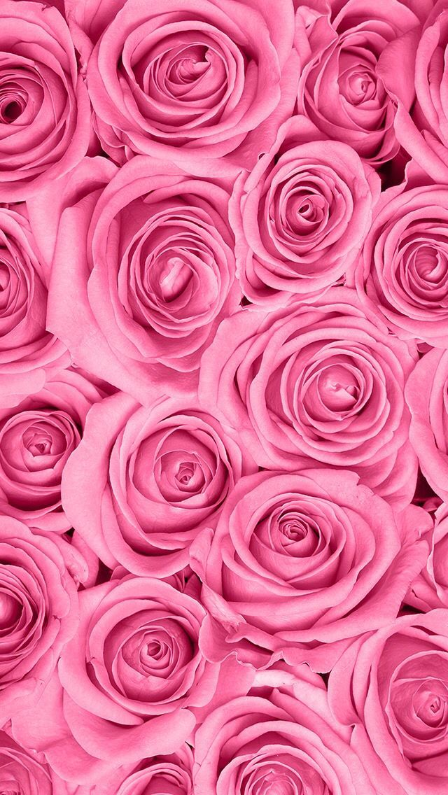 Rose Wallpaper Hd Tumblr For Walls for Mobile Phone