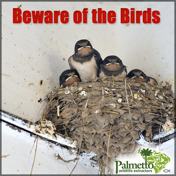 Did You Know Bird Droppings Carry A Number Of Dangerous Diseases If There Is An Accumulation Of Bird Droppings In Your Ch Wildlife Animals Birds Wildlife