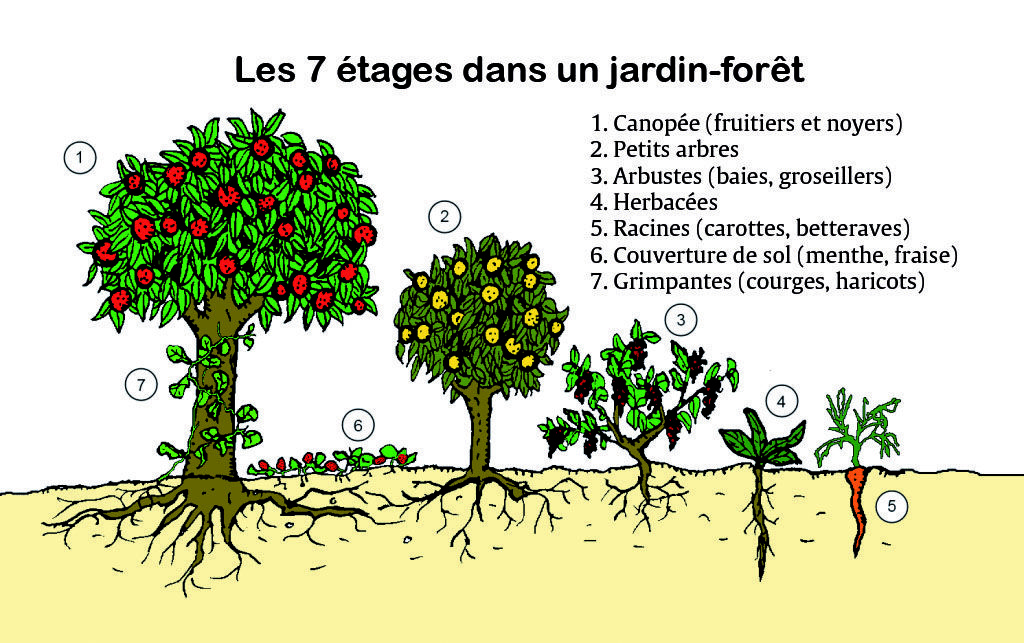 permaculture design agriculture bio balcon jardin serre poulailler food forest jardin. Black Bedroom Furniture Sets. Home Design Ideas