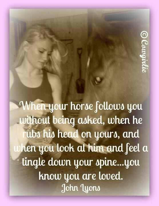 Most of our horses are this way <3