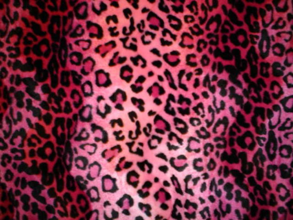 Leopard Print Bedroom Wallpaper 29 Best Images About Animal Print On Pinterest Hot Pink Vs Pink