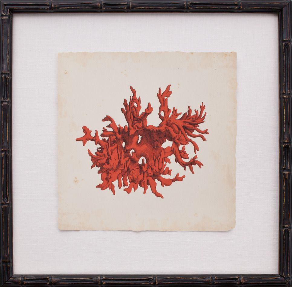 Red coral painting popular red coral print buy cheap red coral print - Red Coral Printed On Archival Paper Floated On Oyster Linen And Finished In An