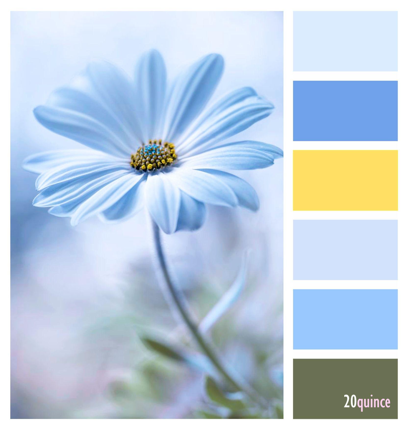 Pin by leticia de robles on colores 20quince pinterest design 411 blue yellowblue daisyblueslanguage of flowersflowers izmirmasajfo