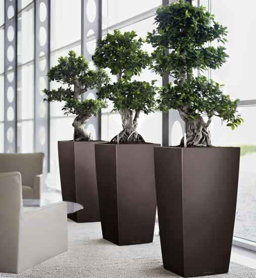 Interior Plantscapes Home Interior Plants
