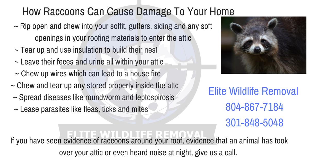 Elite Wildliferemoval 804 867 7184 Or 301 848 5048 In 2020 Raccoon Gutters Roofing