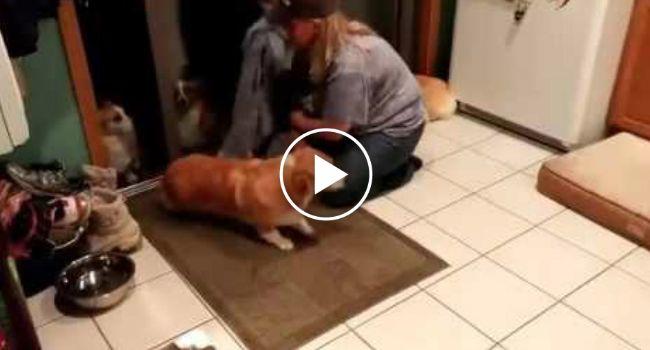 Inteligentes Cães Esperam Em Fila Para Que a Sua Dona Os Limpe Para Poderem Entrar Em Casa http://www.funco.biz/inteligentes-caes-esperam-fila-dona-os-limpe-poderem-entrar-casa/