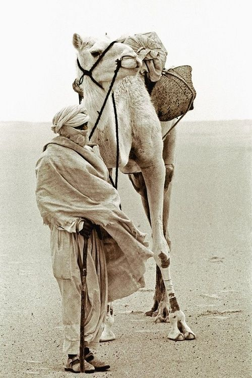 Tuareg and camel in the Desert