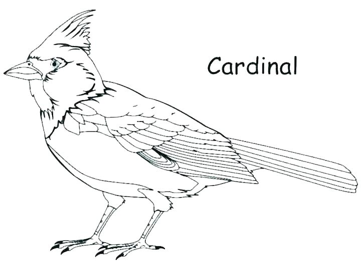 Cardinal Coloring Pages Full Size Of Cardinal Coloring Pages For Adults Page Puffin The A Baseball Coloring Pages Football Coloring Pages Coloring Pages Winter