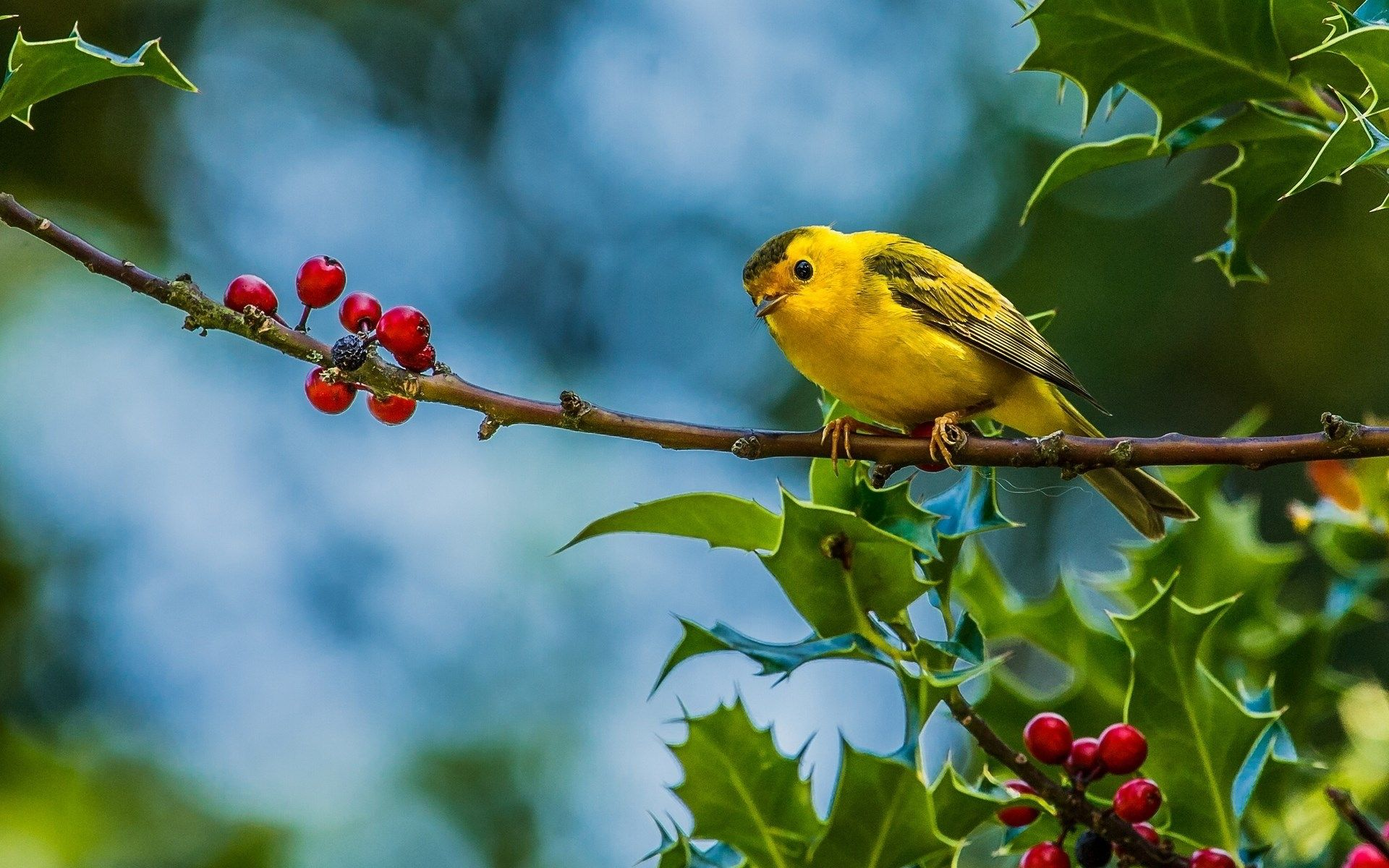 bird free desktop wallpaper | ololoshenka | pinterest | free desktop