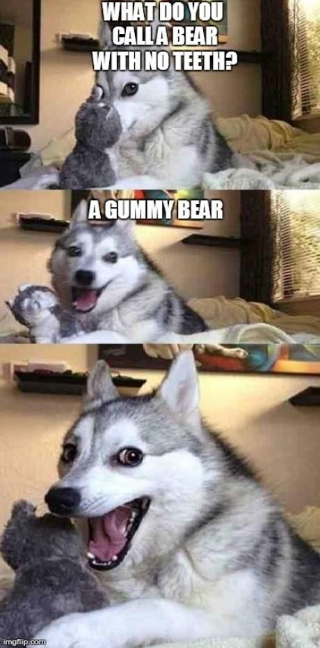 I Wish My Dog Would Tell Me Jokes Like This Funny Animal