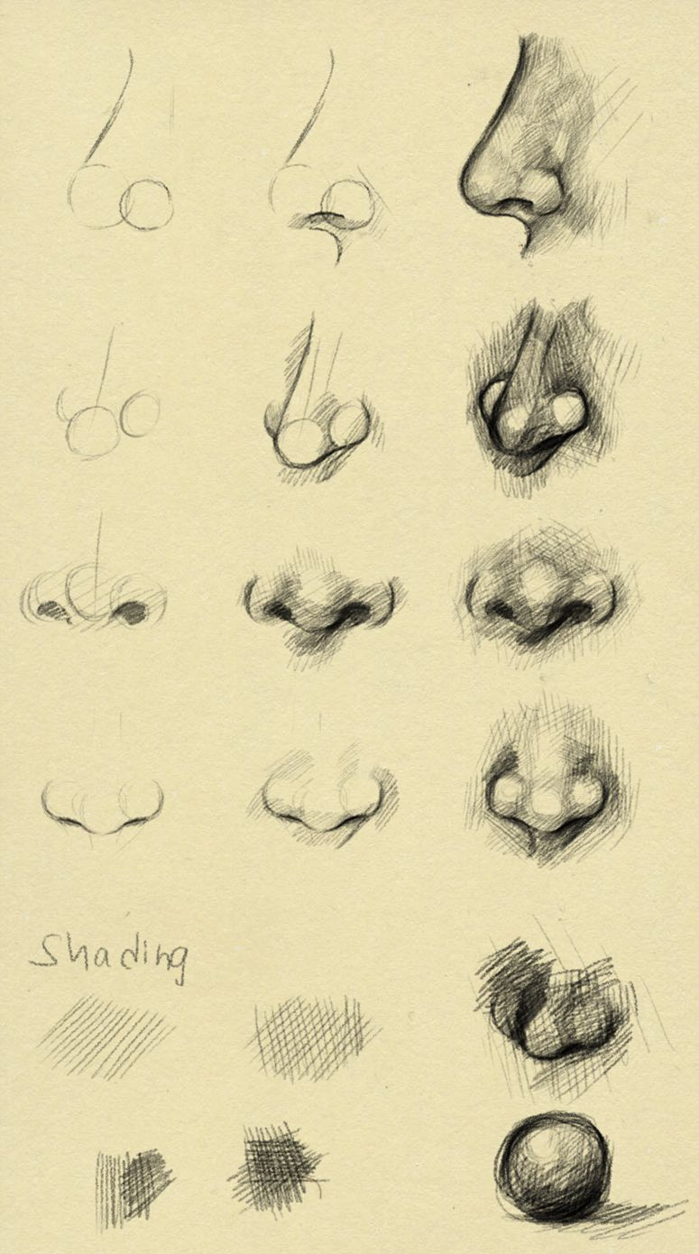 Nose reference by on deviantART