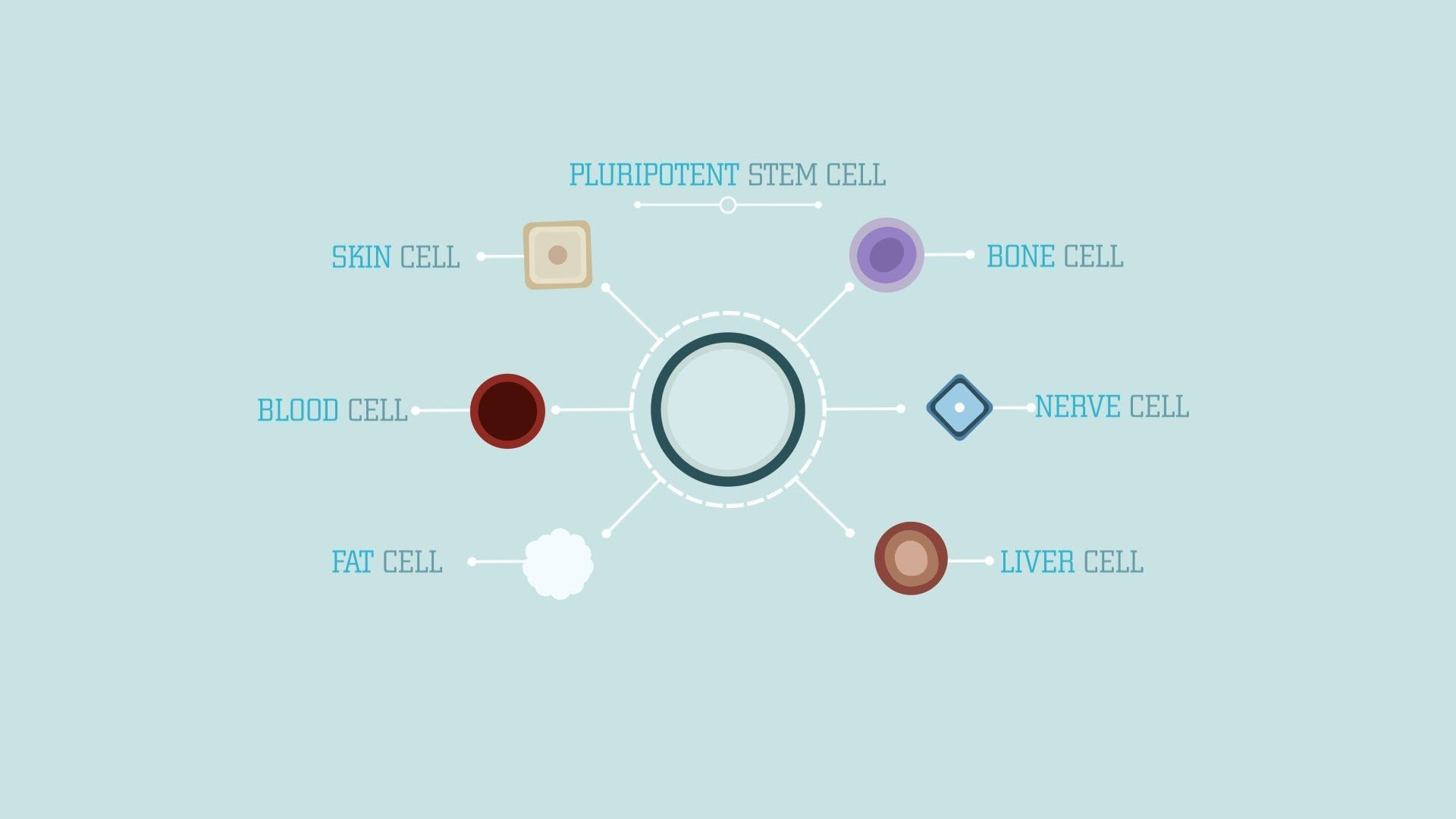 Stem Cells What Are Stem Cells