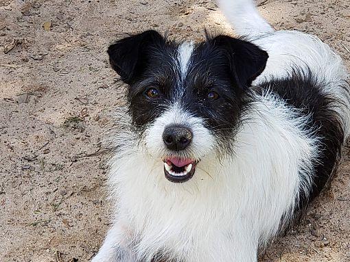 Danbury, CT Terrier (Unknown Type, Small). Meet Harriet