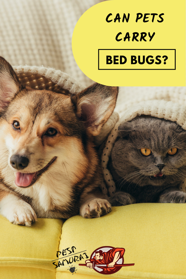 Bed Bugs And Pets Can Pets Carry Bed Bugs With Images Bed Bugs Pet Insurance Dogs Pets