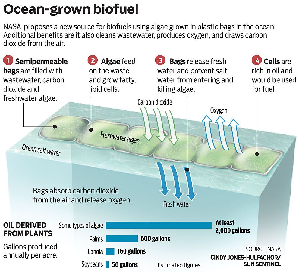 NASA proposes a new source for biofuels using algae grown ...