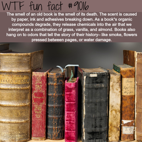 that old book smell A2a smell is chemistry, and the chemistry of old books gives your cherished tomes their scent as a book ages, the chemical compounds used—the glue, the paper, the ink-begin to break down.