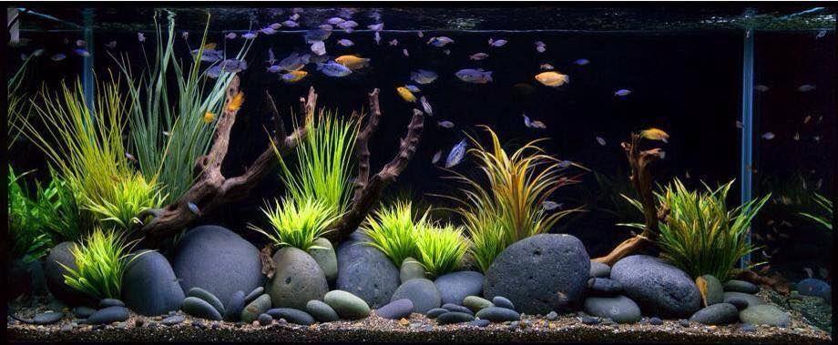 Very Cool River Rock Grass For Aquarium I Feel A Diy Coming On Goldfish Aquarium Tropical Fish Tanks Fresh Water Fish Tank