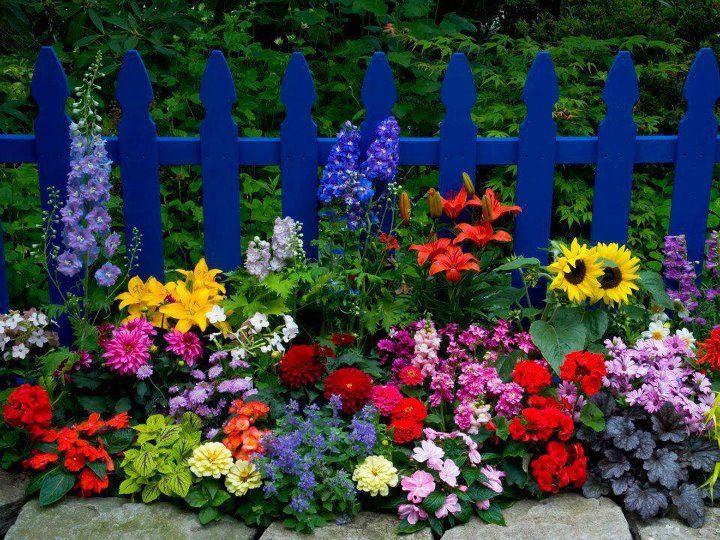 Whimsical Raindrop Cottage Flor De Jardinagem Flores De Verao Flores Bonitas