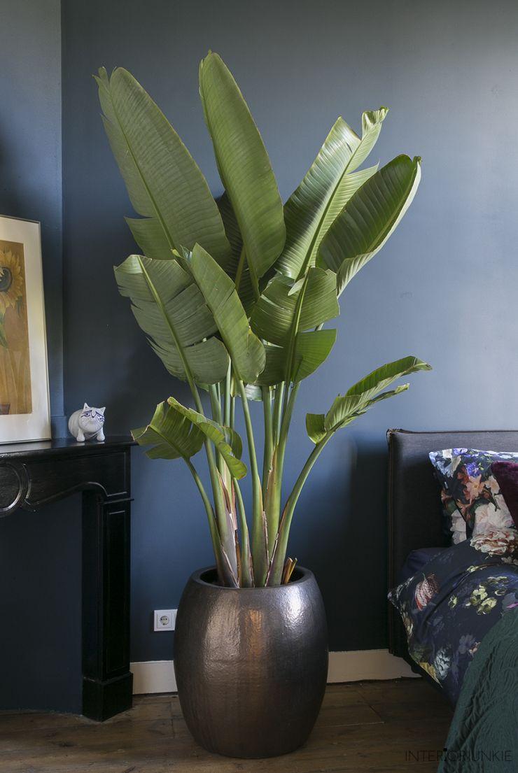 een kijkje in mijn nieuwe slaapkamer boho bedroom decor living room inspiration indoor plants