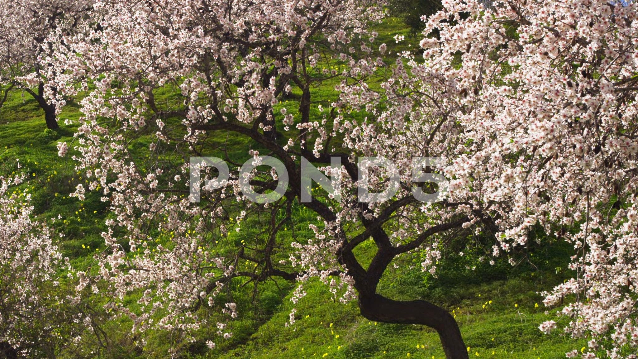 Outdoors Day Medium Shot Wide Shot Zoom Out 10 Seconds Or Greater Nature Stock Footage ShotWideZoomOutdoors