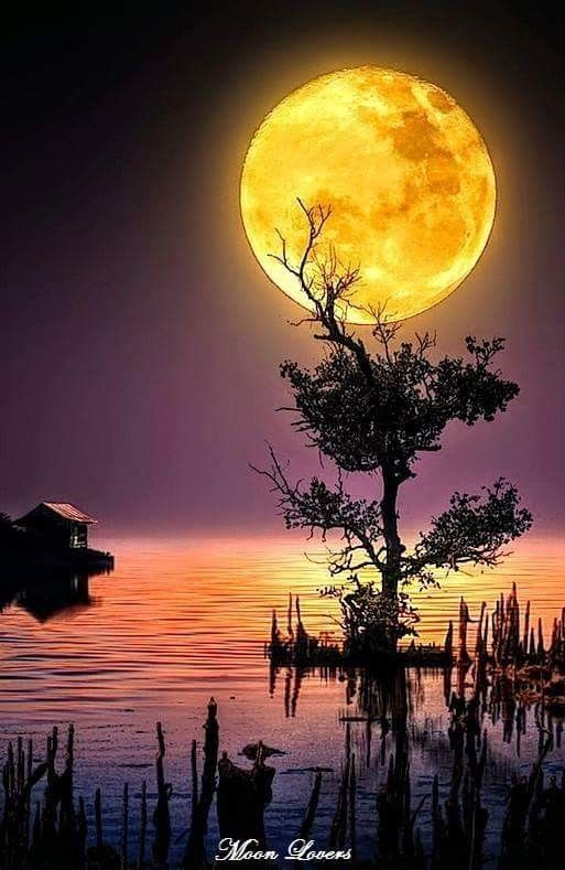Yellow Moon #landscapepics