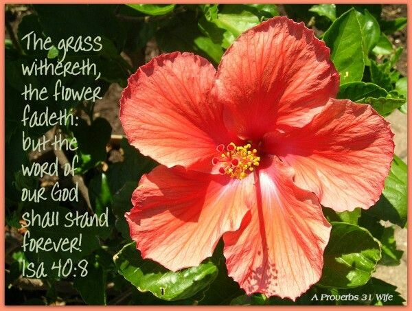 Isaiah 40 8 Christian Quotes Scriptures In The Beginning God Hibiscus