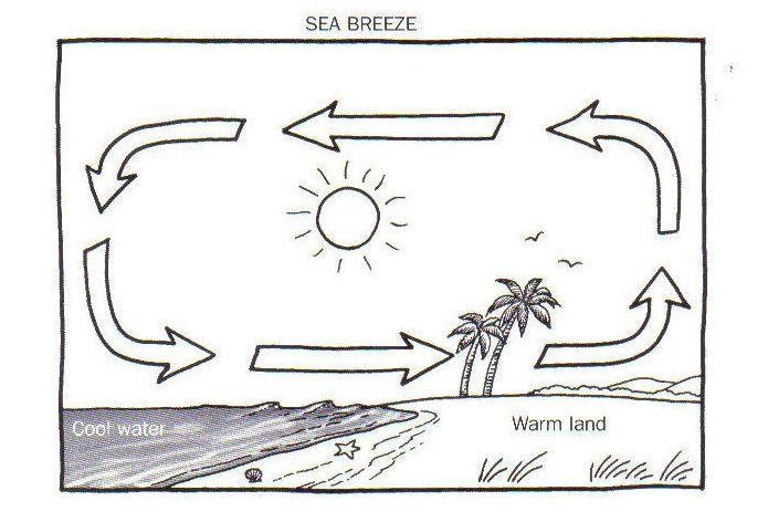 Land And Sea Breeze Diagram Worksheet | school | 7th grade science ...
