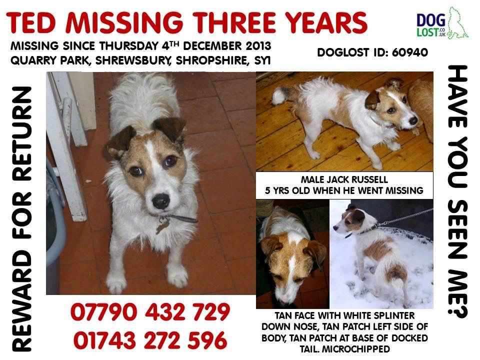 Pin By Stolen And Missing Pets Allian On Missing Dogs Losing A Dog Cat Uk Jack Russell