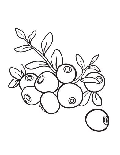 Printable Blueberry Coloring Page Free Pdf Download At Http Coloringcafe Com Coloring Pages Blueberry Coloring Pages Simple Flower Design Fruits Drawing