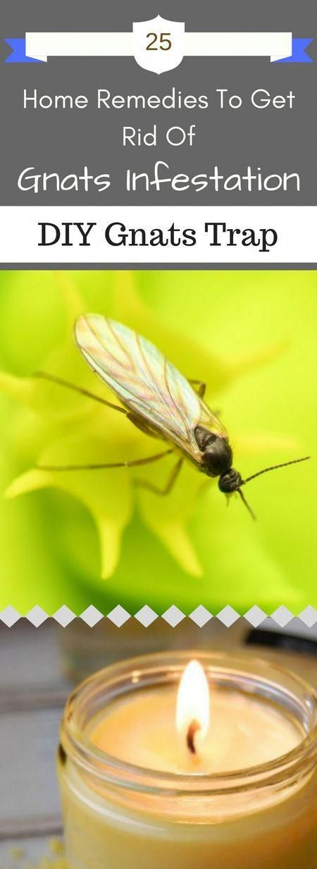 25 Quick Action Home Remedies To Get Rid Of Gnats Infestation In Your House #gnats 25 Natural  and DIY Home Remedies To Get Rid Of Gnats Infestation #homepestcontrolhouse #gnats