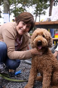 Lorenzo Standard Poodle With Cynthia Anderson Seen On Scene