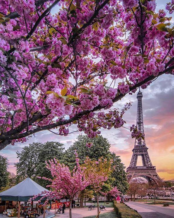 عندما يلتقي جمال الطبيعة بإبداع العمارة الصورة من باريس بفرنسا حلول Tour Eiffel Eiffel Tower Visit Paris