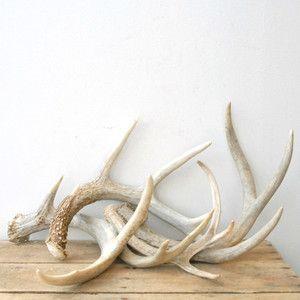 Pin Van Nicole L Abee Op Items Objects Geweien Hoorns Decoratie