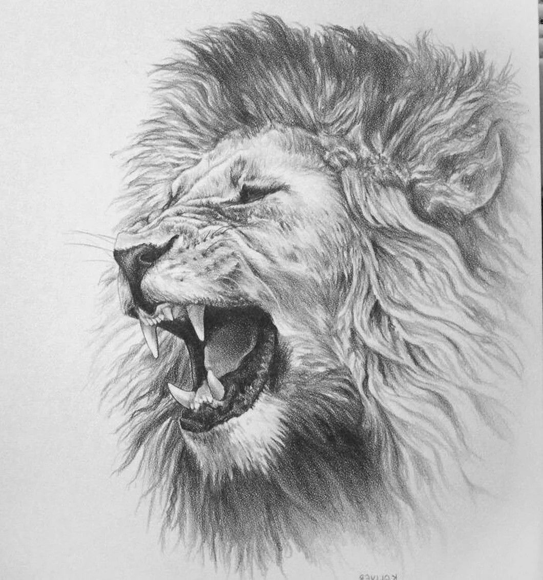 Image by Michael Lee on Cool Art Lion sketch, Lion