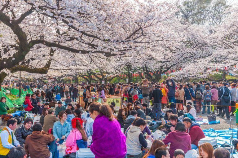 Sakura And Its Significance In Japanese Culture Kara S Blog Japanese Culture Hanami Japan