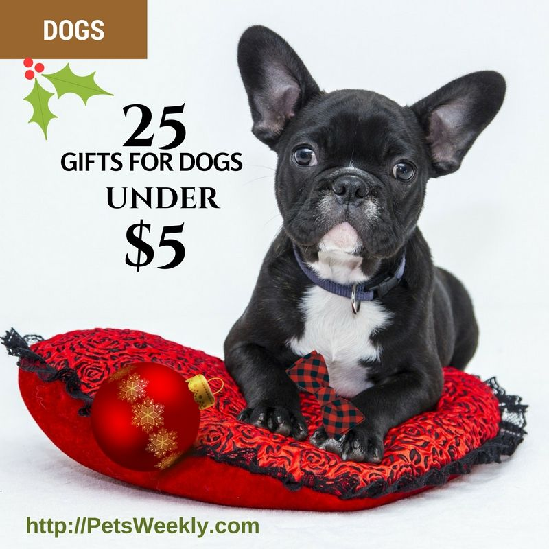 25 gifts for dogs under 5 french bulldog grey french