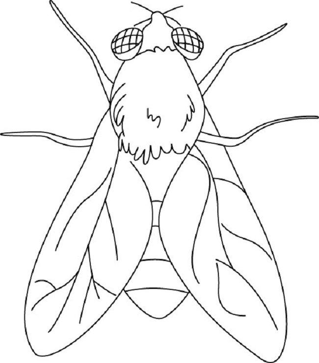 Flying Insects Coloring Page Seni Ilustrasi Serangga