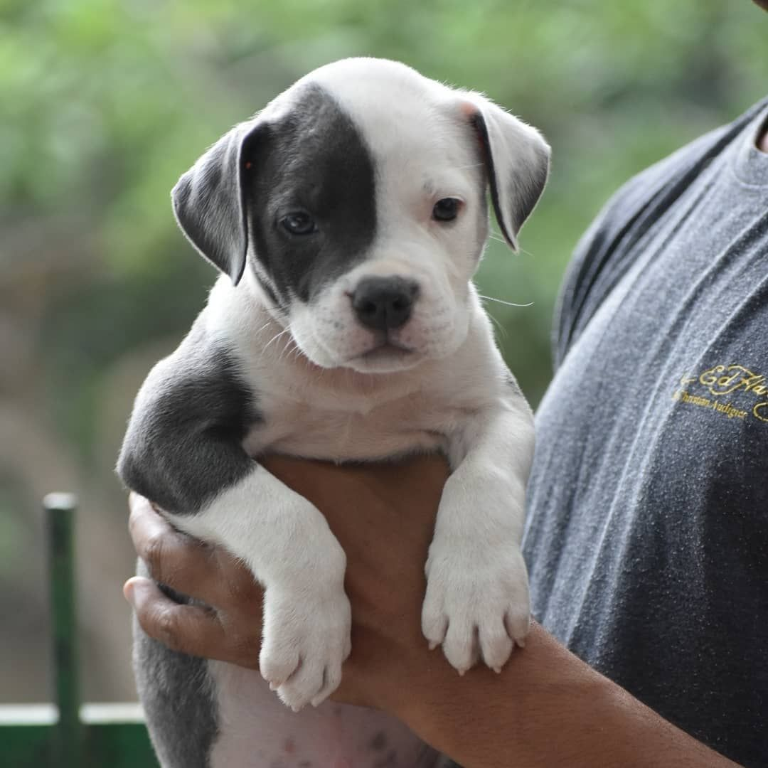 Best Pets Shops In Delhi Pets Shops In South Delhi In 2020