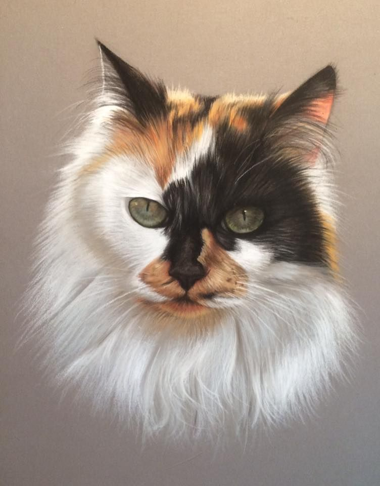 Virginie Agniel Warrior Cats Art Cat Art Pet Portraits