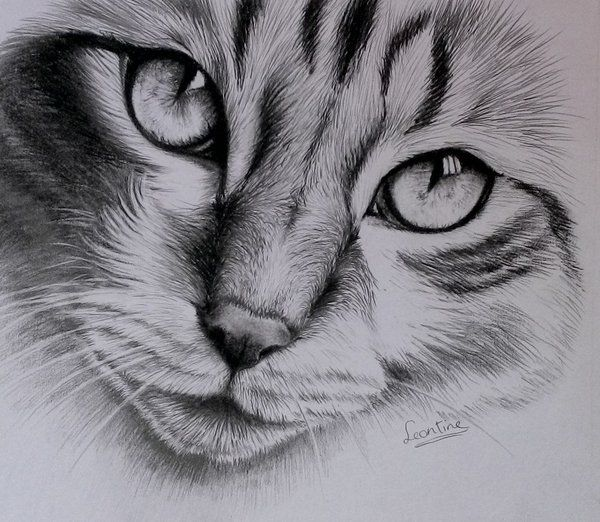 Cat Finished By Horsenart95deviantartcom On At Deviantart Arte