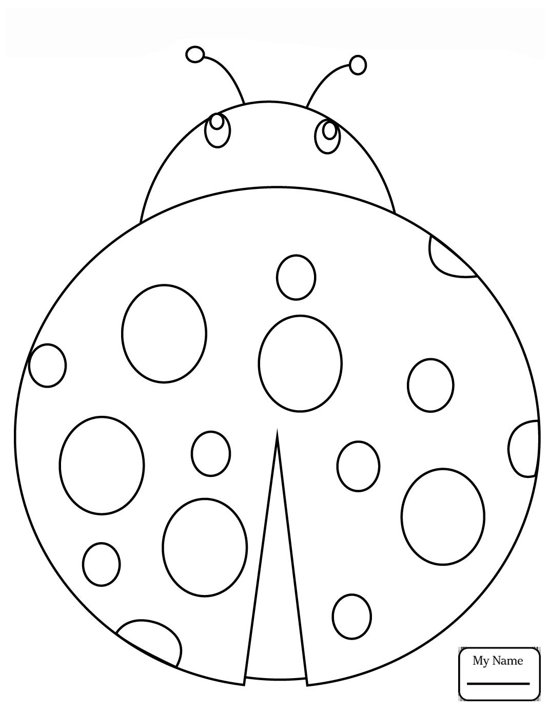 Image Result For Ladybug