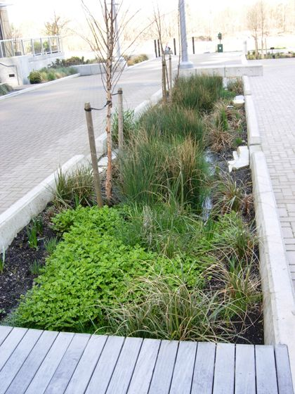 Suggests a formal garden meriwether stormwater planters for Rain garden design