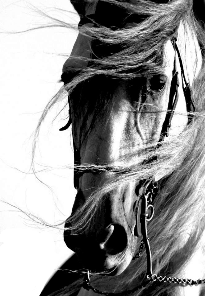 Exercice De Style Jolis Chevaux Animaux Beaux Image Cheval