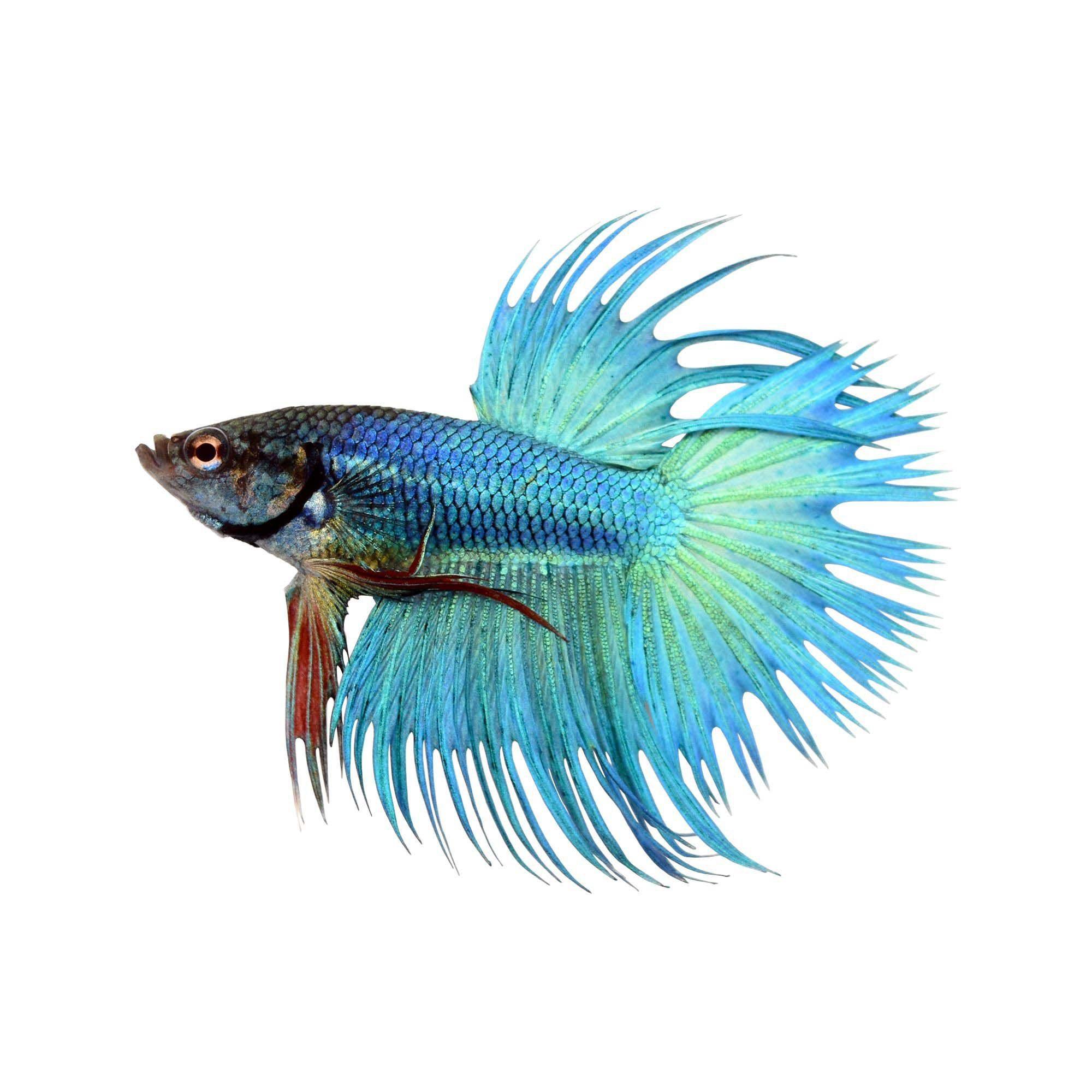 Pin On Aquarium Fish And Plants