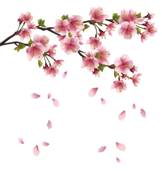 beautiful pink spring branch with falling petals png japanese clip art free sun japanese clip art peace