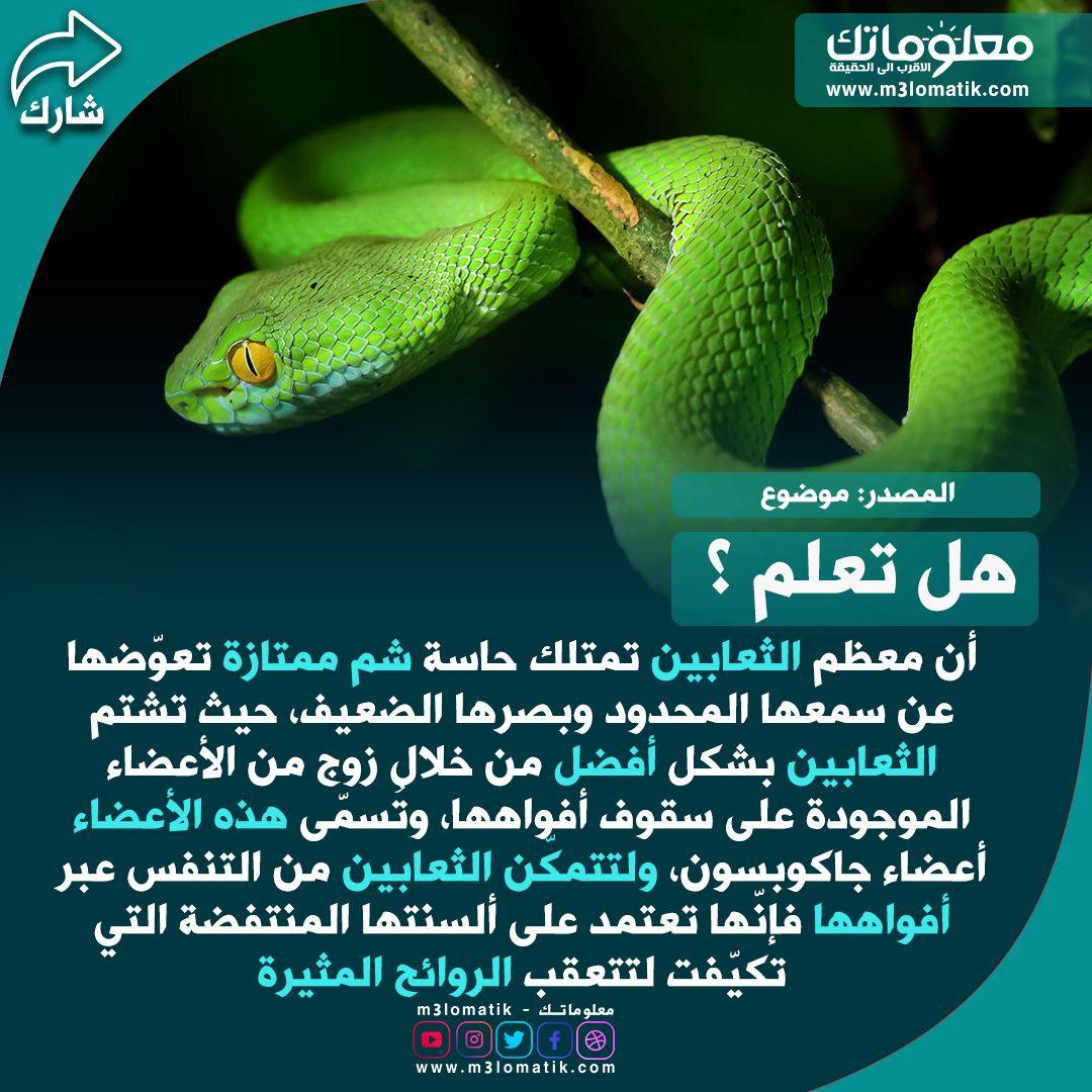 الثعابين Snake