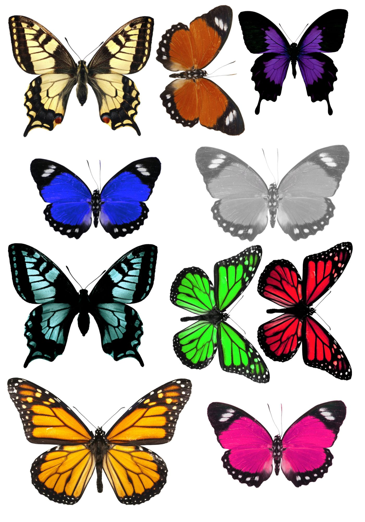 It is an image of Exhilarating Free Printable Butterflies
