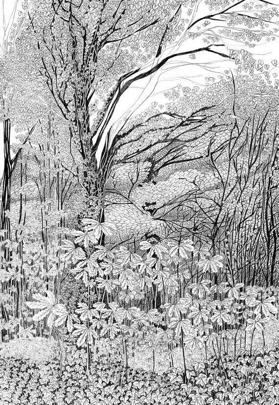 Tree drawing, Archival Art Print, woodland print, tree ...