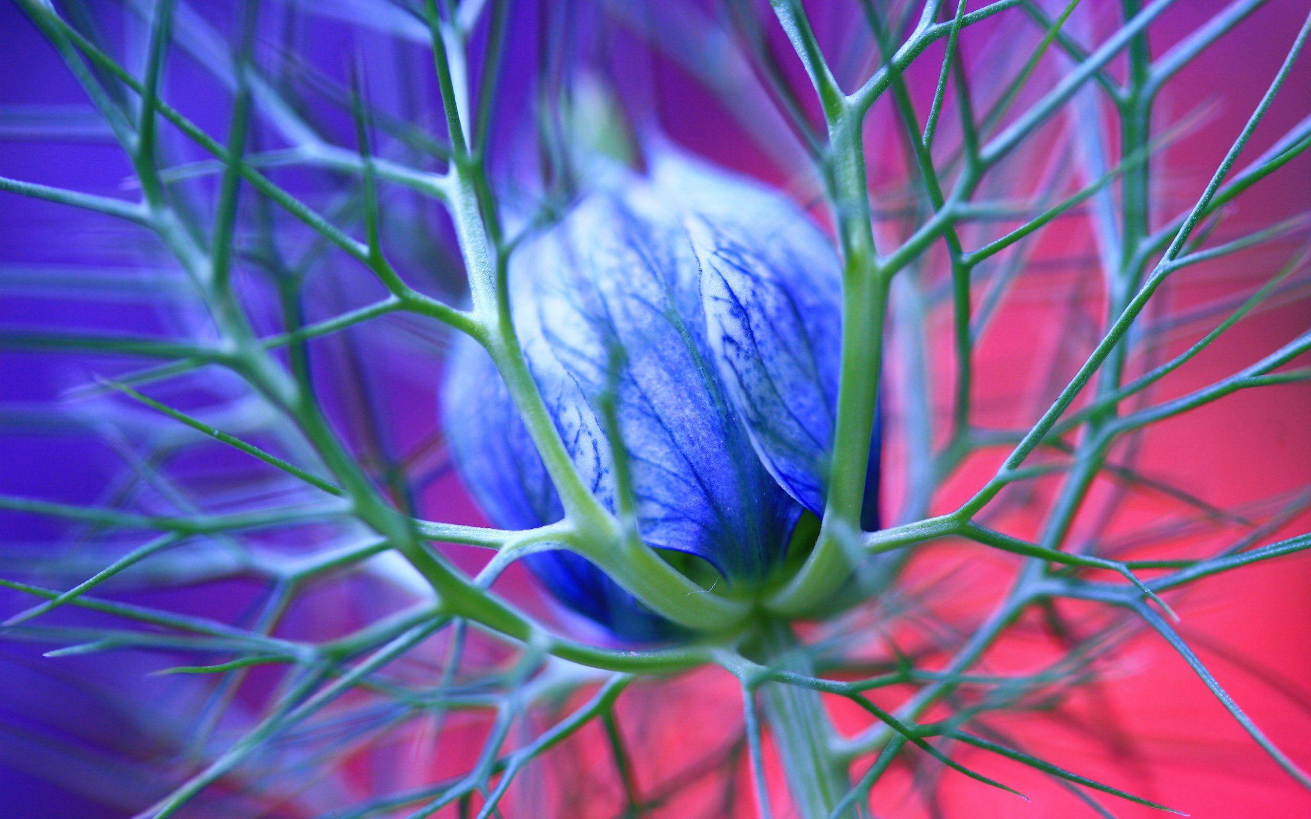 Pinkflowerpicturesandnames nature sea wood flowers hq blue flowers thorns ipad wallpaper ilikewallpaper com blue izmirmasajfo